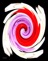 Red Rose Purple Rose White Rose Twirl